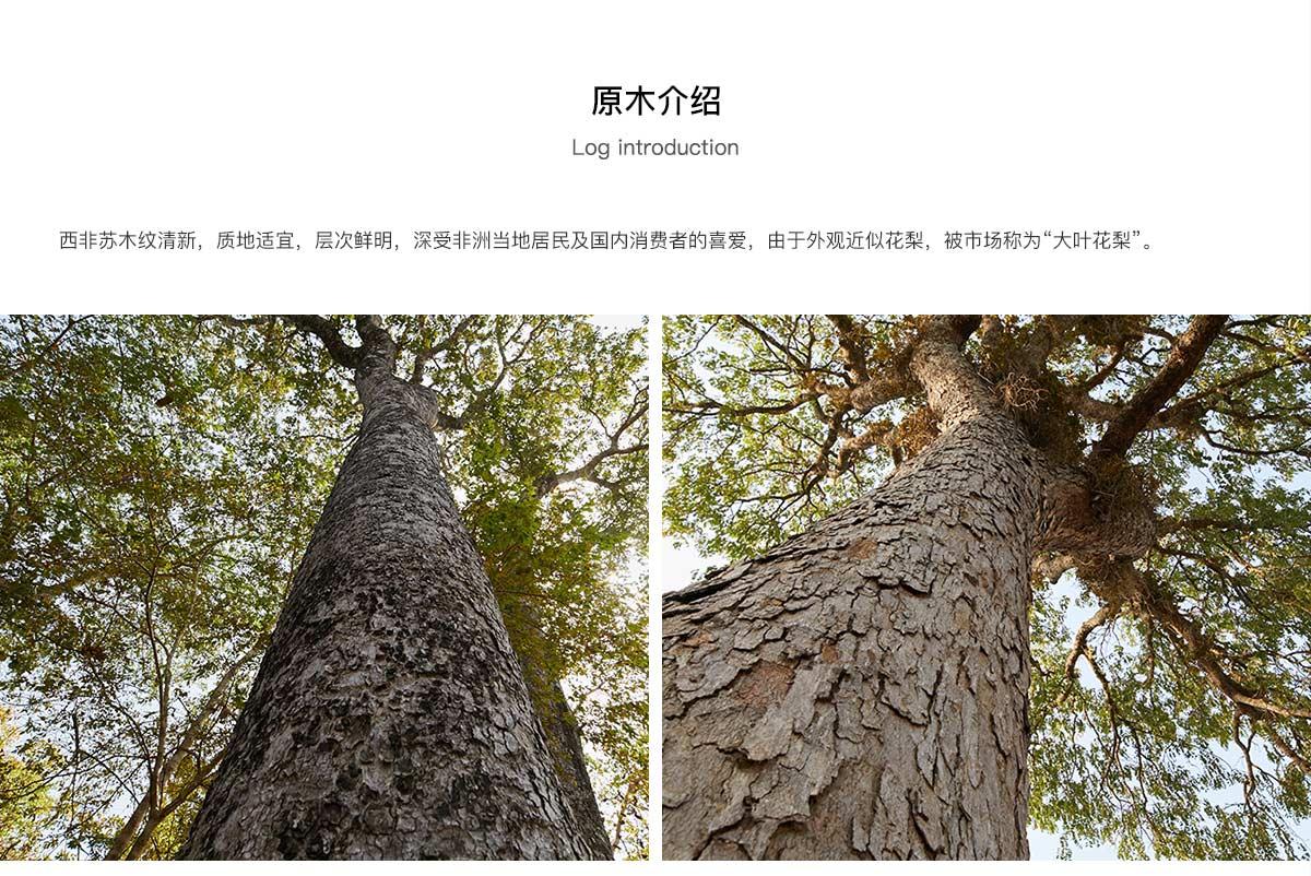 大叶花梨/西非苏木
